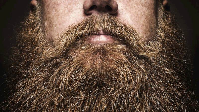 shampoo and conditioner for beards